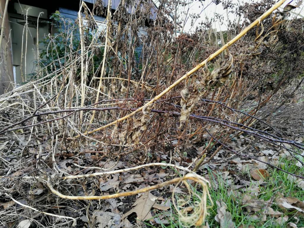 border winter oude planten