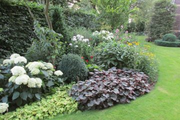 border zomer vaste planten