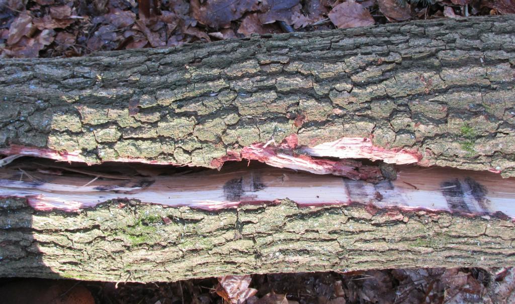 eikenhouten kloofpalen