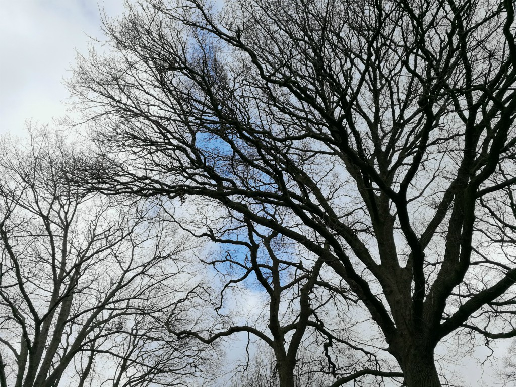 kale bomen lucht