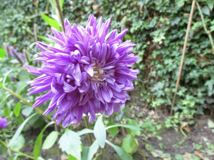 Alles over snijbloemen uit eigen tuin