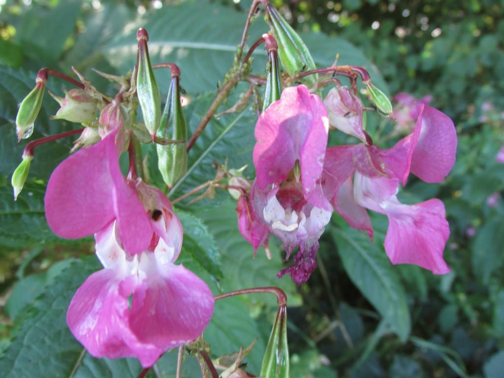 springbalseming bloemen