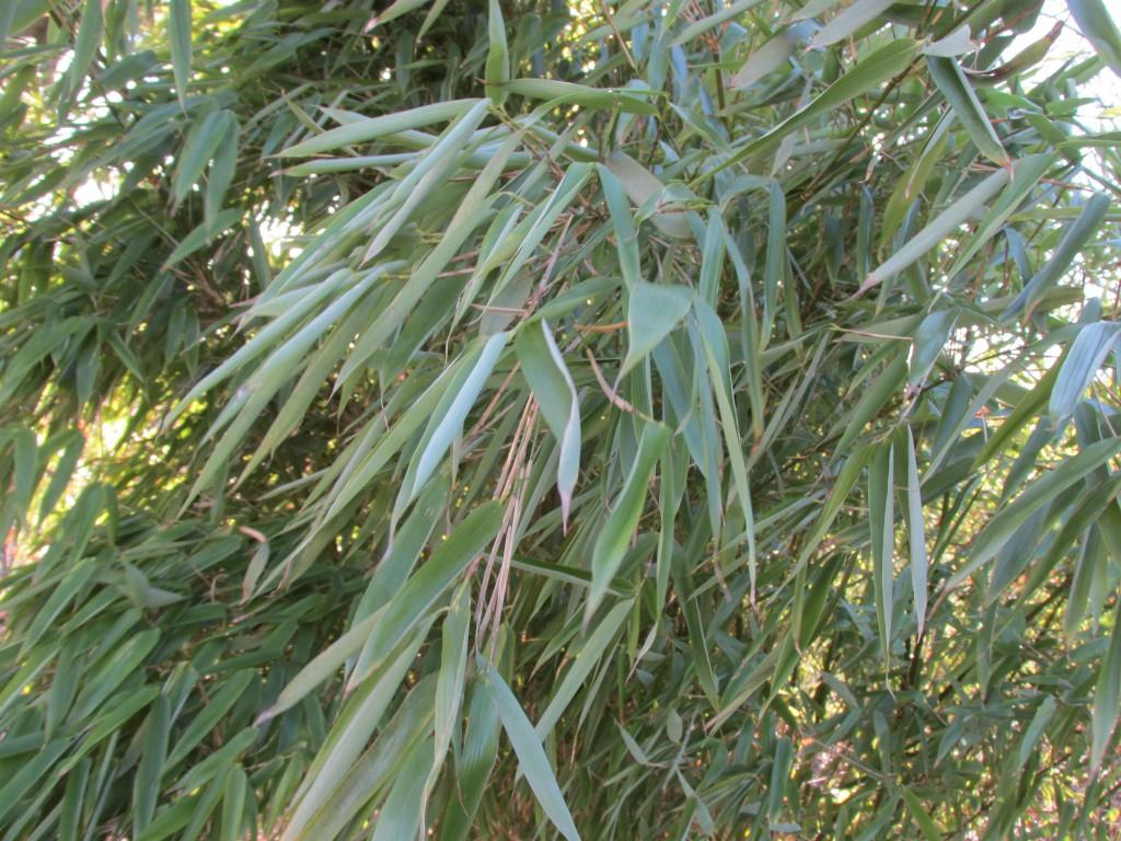 verdorde bamboe