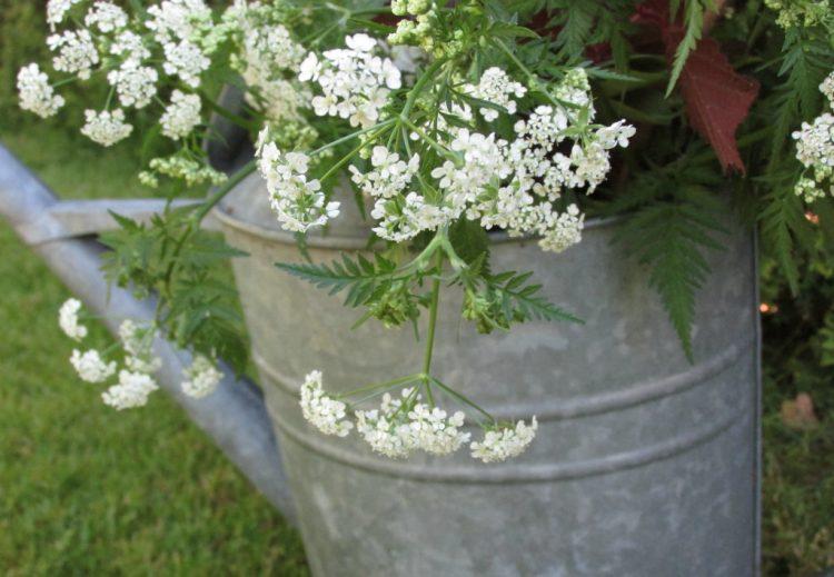Zet je bloemen eens in iets anders dan een vaas