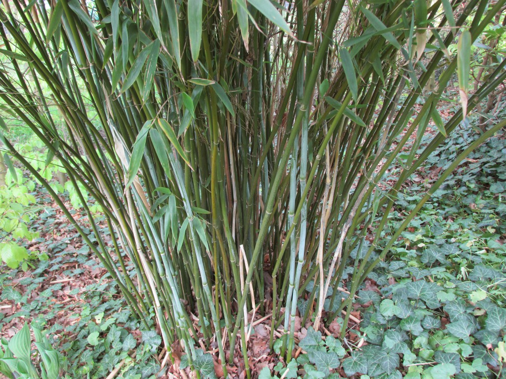 bamboestengels