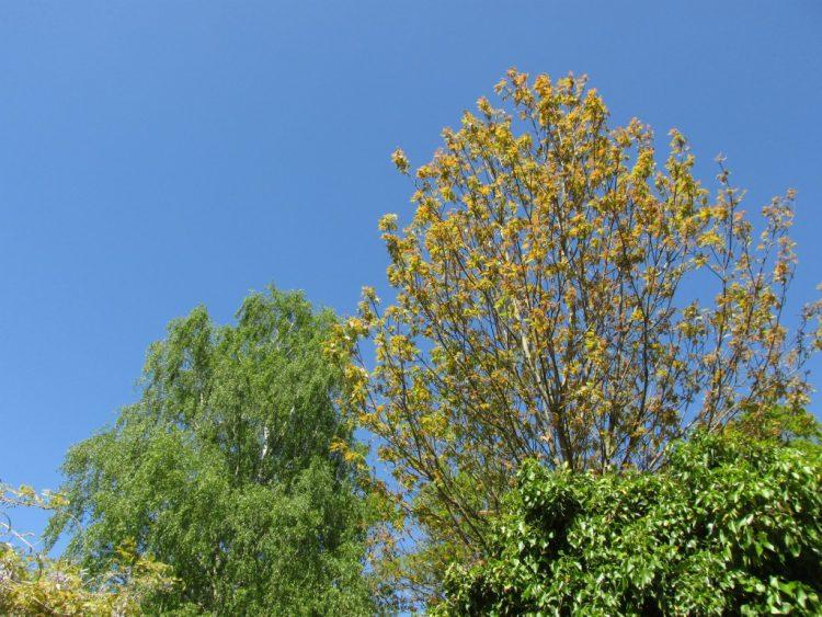 Eerste week van juni: bomen snoeien