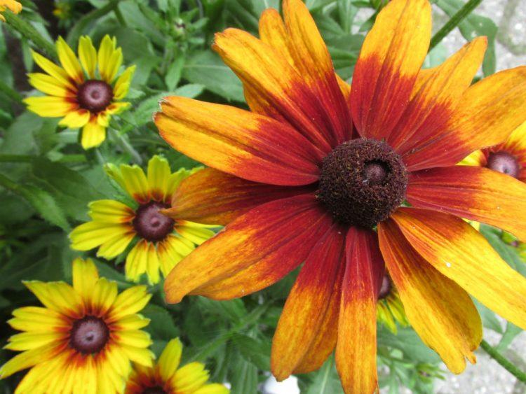 Bloemen en planten die goed in de volle zon kunnen