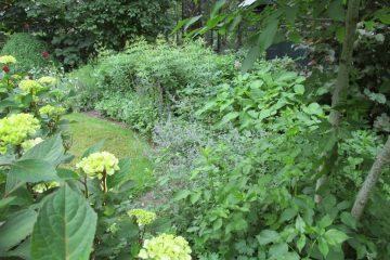 border vaste planten bemesten juli
