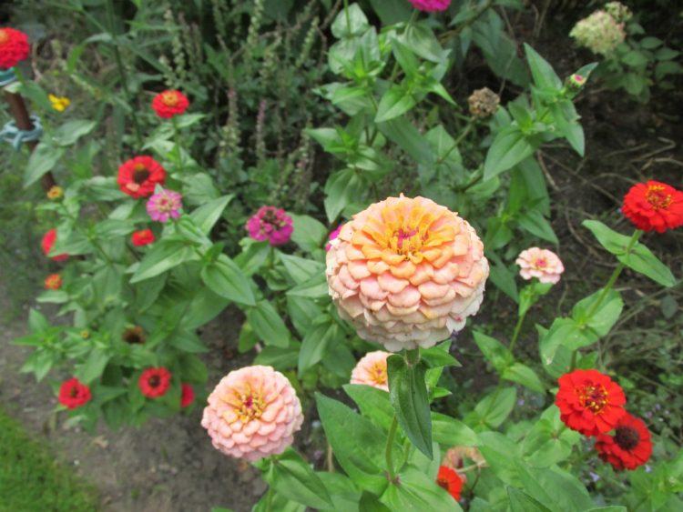 Dode bloemen uit de snijtuin halen
