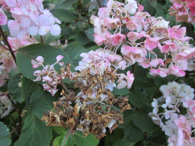 Droogteschade aan je bloemen en planten, dit doe je eraan