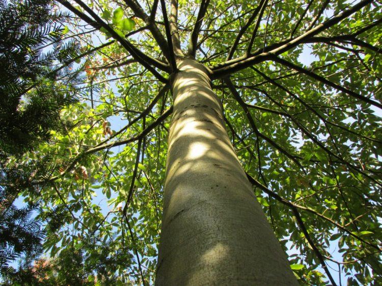 De omtrek van bomen meten