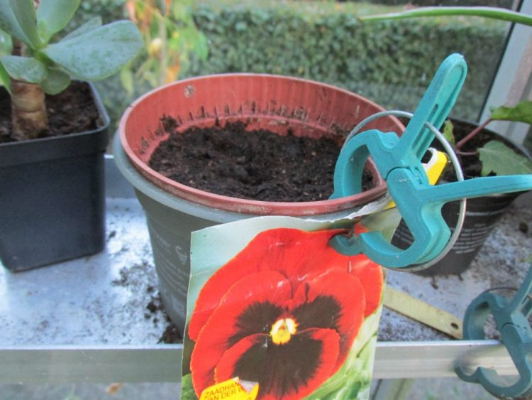 Groenten en planten zaaien en laten overwinteren in de onverwarmde kas