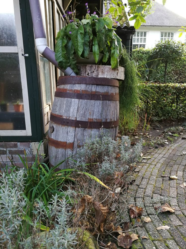 Waarom er altijd water in je eikenhouten regenton moet zitten (behalve in de winter)