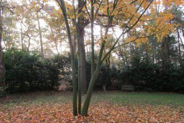 boomboeket