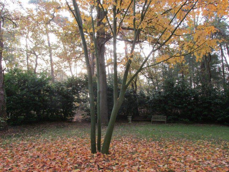 Boomboeket: meerdere stammen die één boom vormen