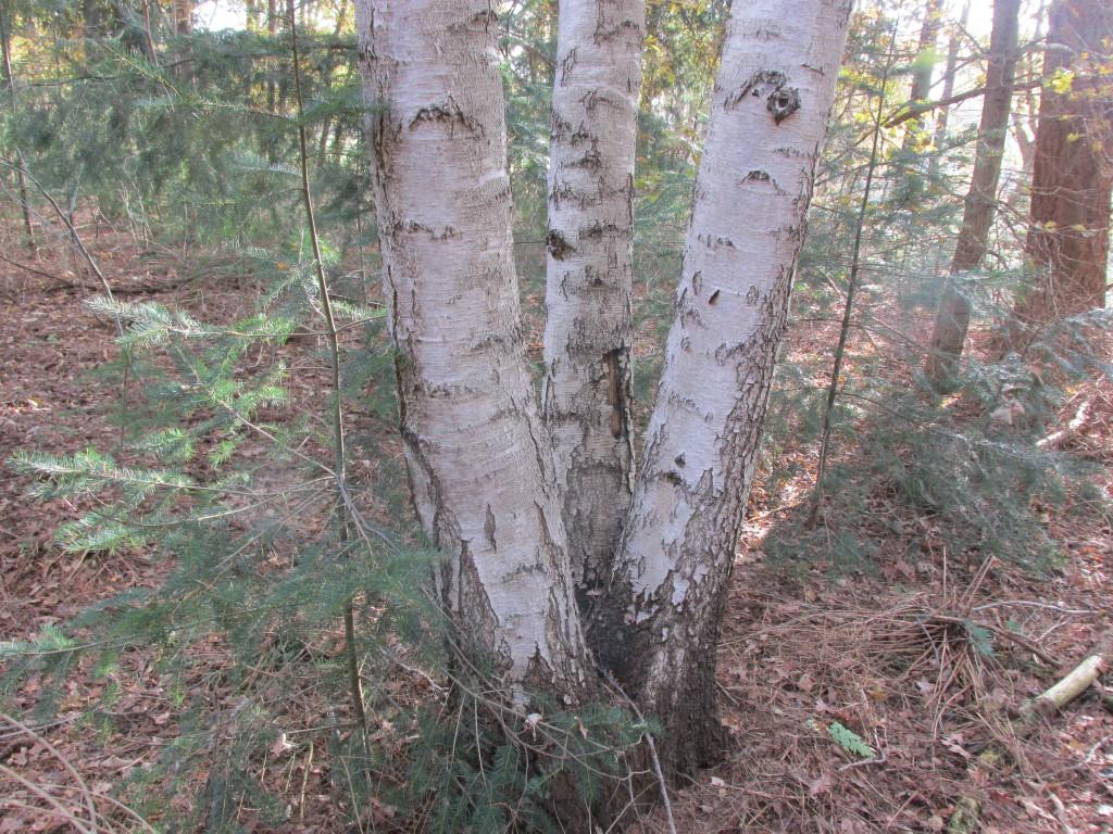 boomboeket natuur