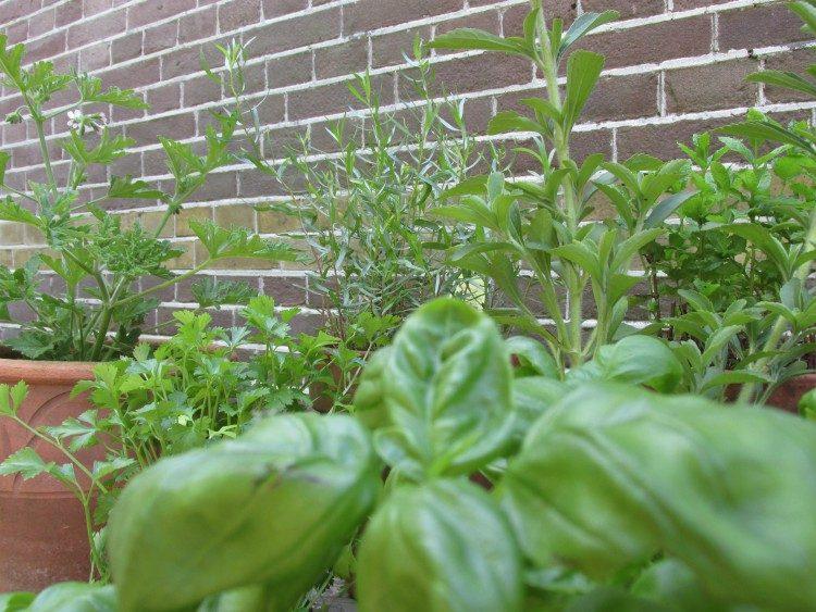 Een kruidentuin aanleggen & kruiden kweken