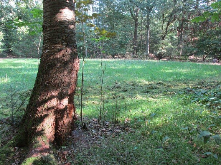 Verschralingsbeheer van een bosgazon (bosweide): zo werkt dat