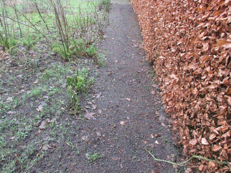 Tip: laat een pad langs je heg vrij