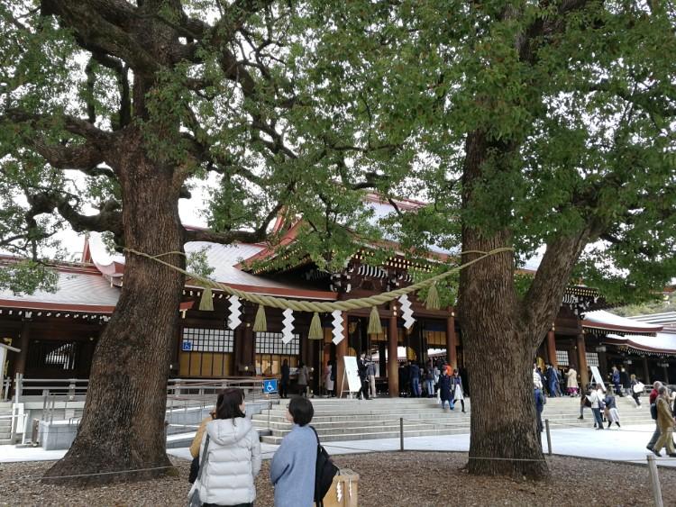 Meoto Kusu heilige bomen2