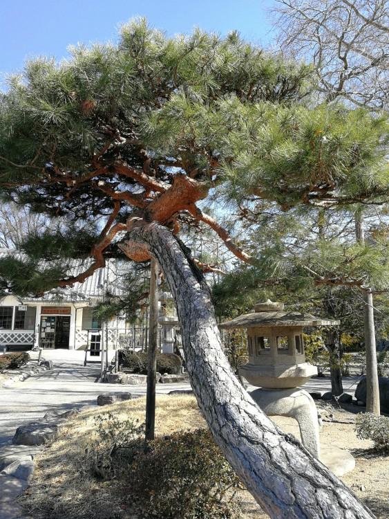 boom matsumoto kasteel