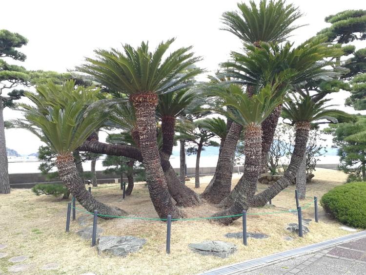 bijzondere palmbomen