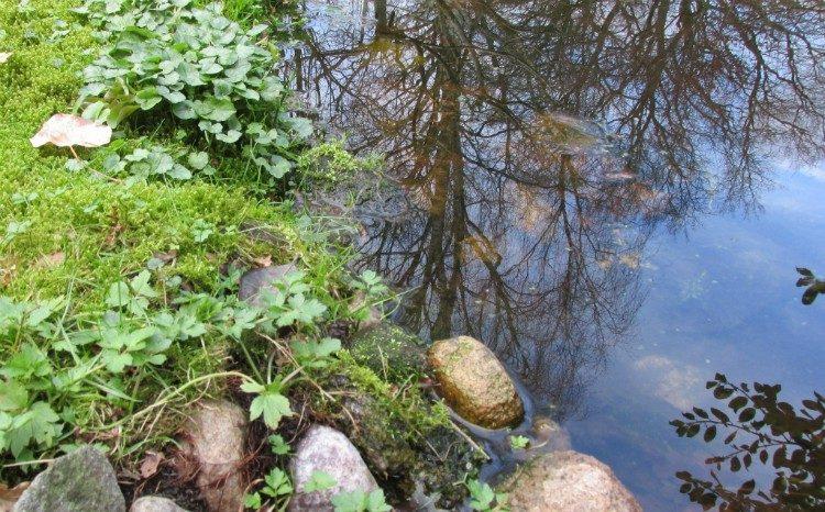 Vijver oppervlakkig schoonmaken in de lente