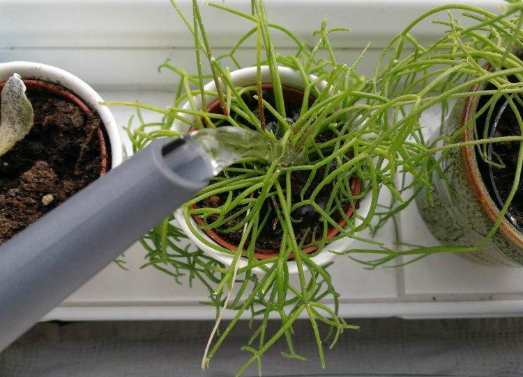 Het belang van voeding bij kamerplanten