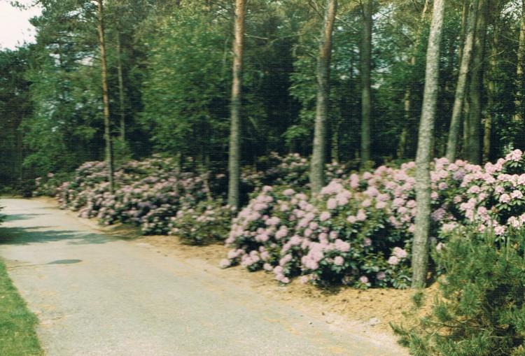 Duitsland 6 - weg met rododendrons