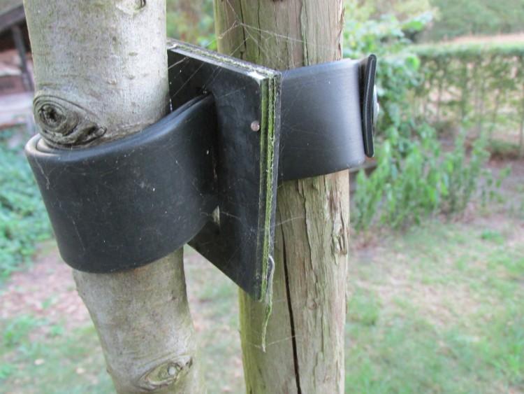 boom verplanten boomband