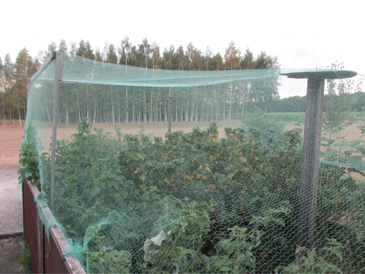 fruit beschermen vogels net