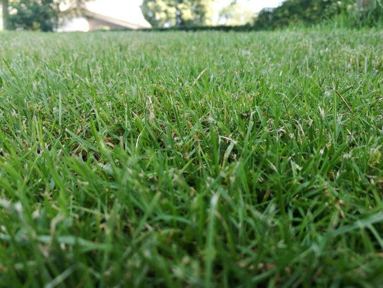 Gras maaien bij droogte