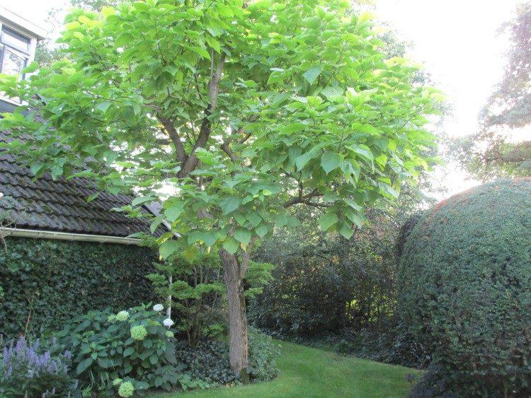 Oudere bomen verzorgen