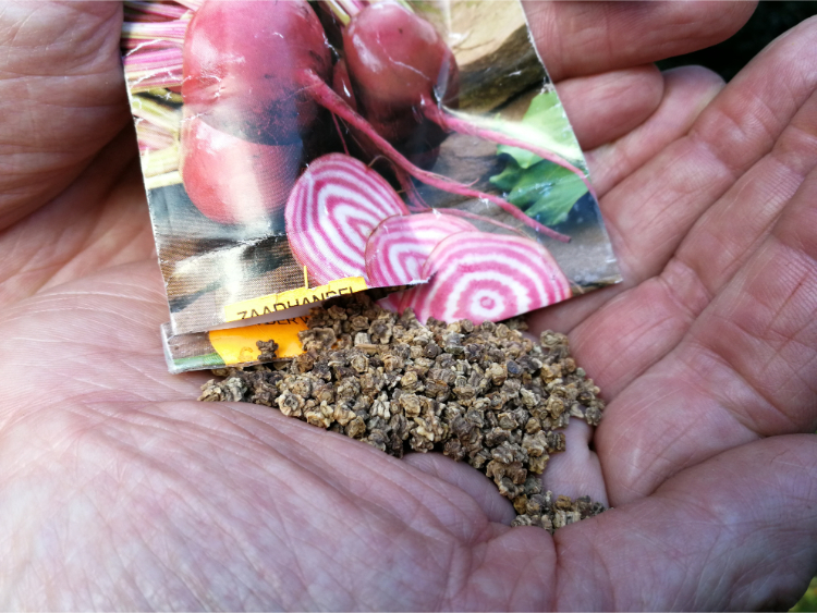Kiemkracht zaden behouden