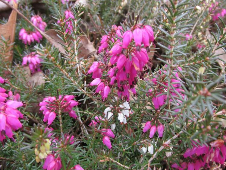 winterheide bloemen