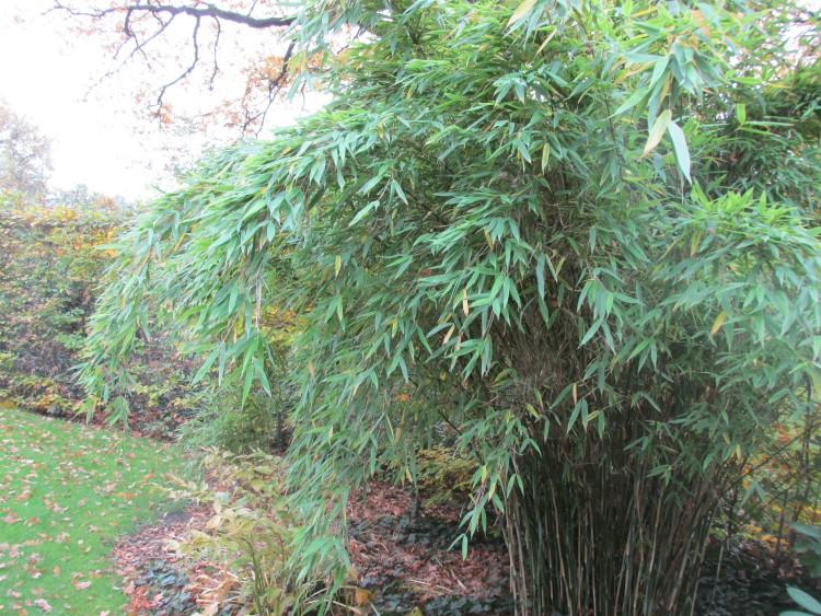 bamboe tropische plant