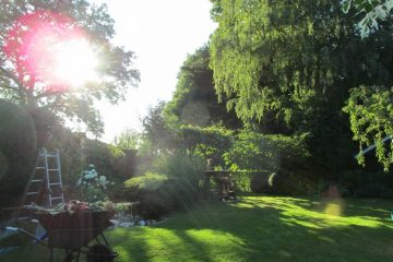 achtertuin zomer