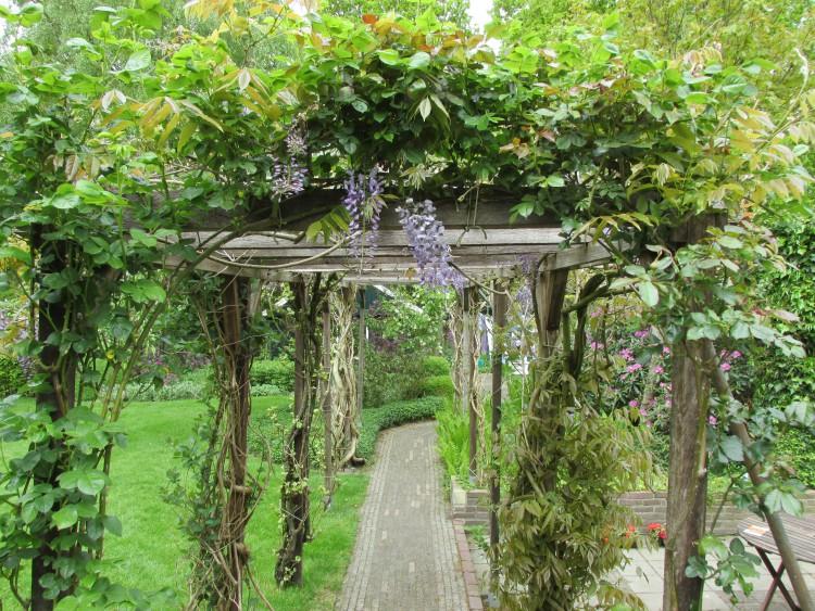 blauwe regen klimplant pergola