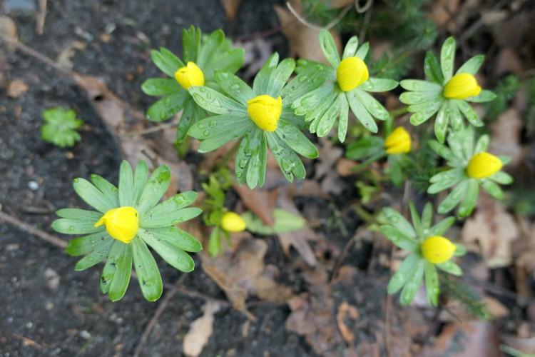 Deze planten bloeien in februari