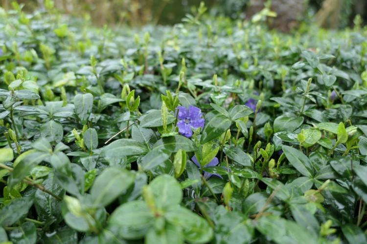 Deze planten bloeien in maart