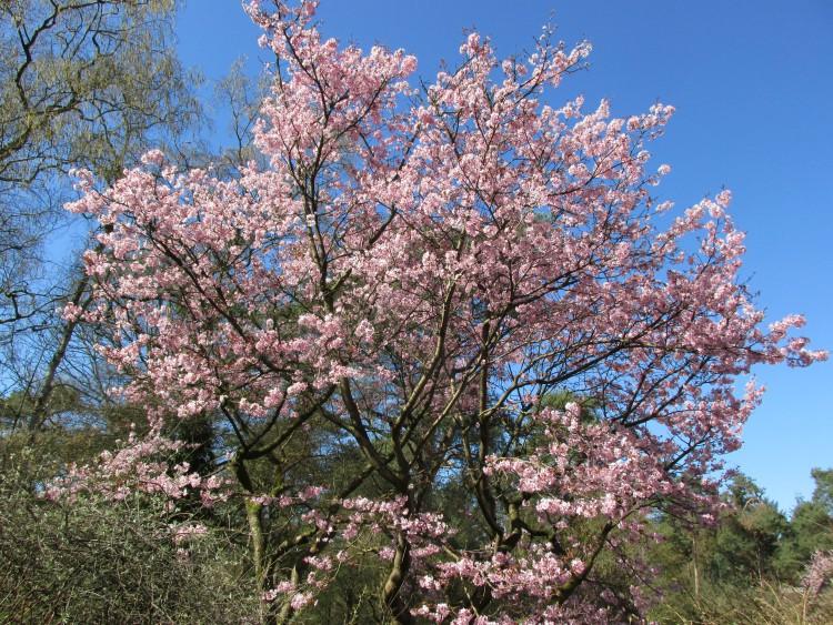 Japanse sierkers april
