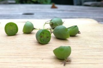 kiwibes doorgesneden op plank