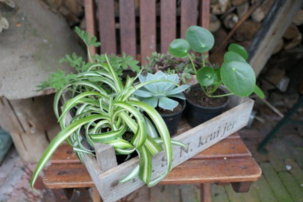 plantenpakket verrassing Groene Passies