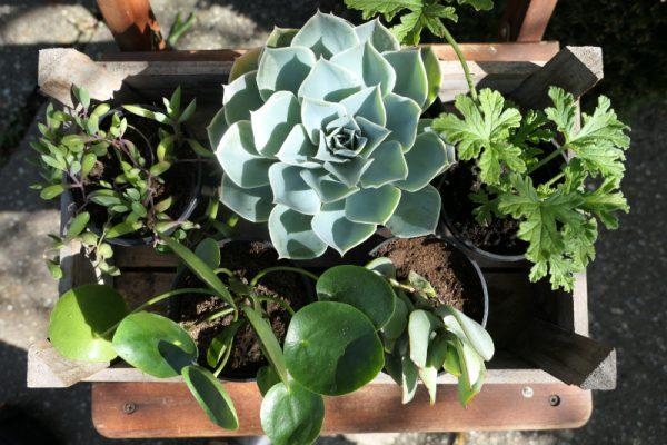 plantenpakket verrassing Groene Passies2
