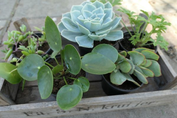 plantenpakket verrassing Groene Passies3