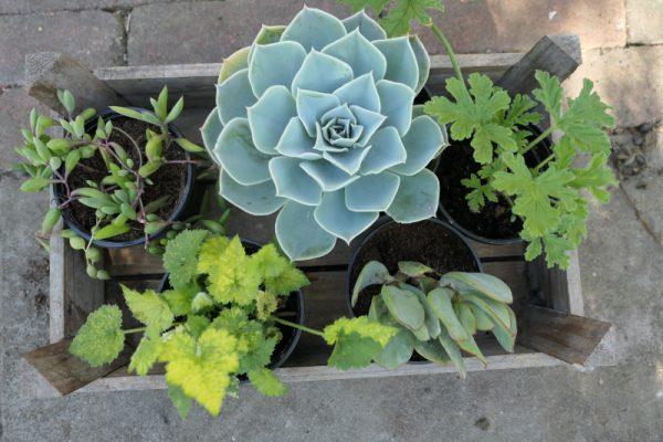 plantenpakket verrassing Groene Passies4