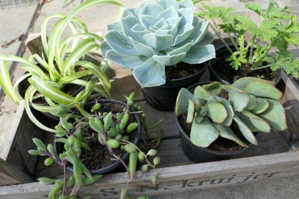 plantenpakket verrassing Groene Passies5