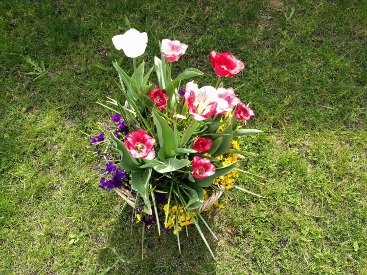bollenmand met tulpen