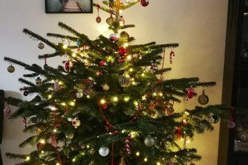 kerstboom 2020 daglicht