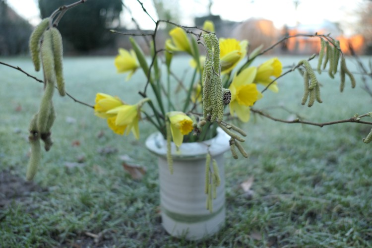 voorjaarstakken narcis berk